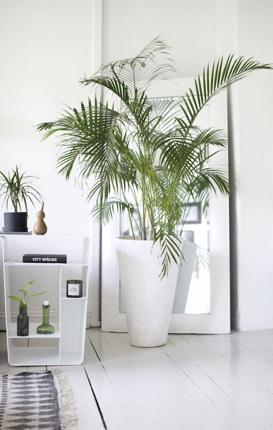 plant shelfies gerrn plant Indoor Plants Indoor Garden Houseplants